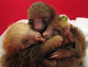 It's okay. The sloths still love you.
