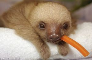 SLOTHWITHCARROT