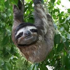 Sloths also appreciate trigger warnings.