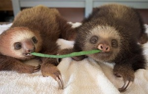 Sloths love both community and Oscar Wilde references.