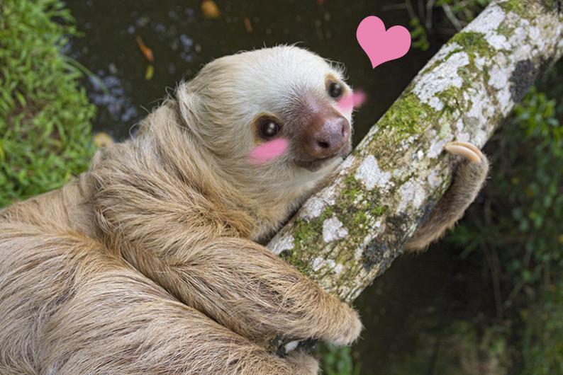 Sloth Sarah Hollowell