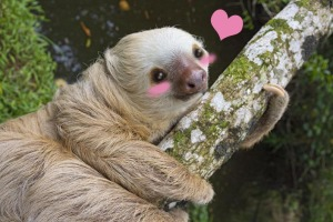 kawaii sloth